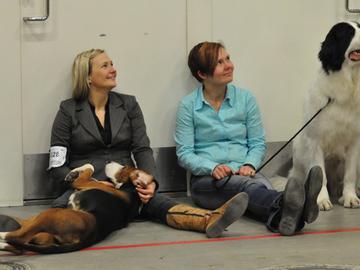 52 prosenttia suomalaisista on koiraihmisiä!