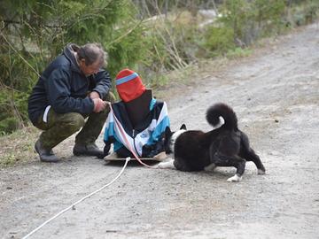 Eläinsuojelulain koirapykäliin ei ole tulossa suuria muutoksia