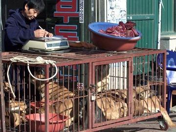 Koiranliha porisee padoissa olympialaisista huolimatta