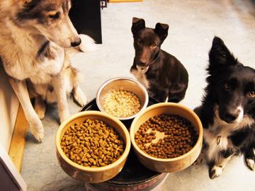 Koirien maitohappobakteerista tulee vientihitti?