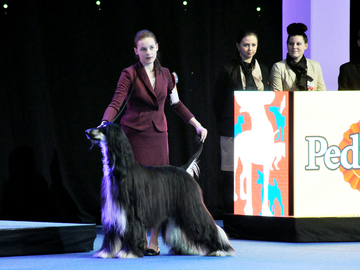 Latviassa junior handlereille roturajoituksia