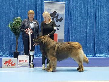 Tallinnan näyttely verotti Vaasan koiramäärää