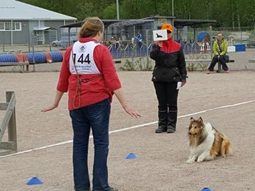 Vantaalla Suomen tottelevaisimmat koirat
