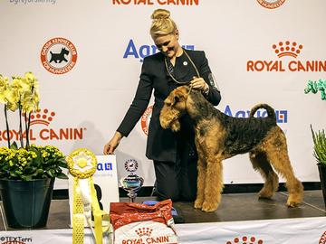 Tanskassa palkittiin vuoden koirat