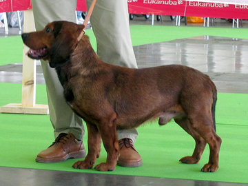 Itävallan EV-näyttelyyn 13200 koiraa