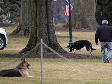 Presidentin koirat maitojunalla kotiin