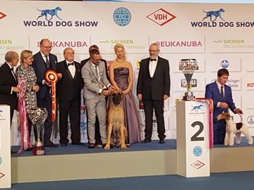 Italialainen tanskandoggi Maailmannäyttelyn kaunein