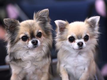 Vastuullinen jalostus edistää ja ylläpitää koirien hyvinvointia