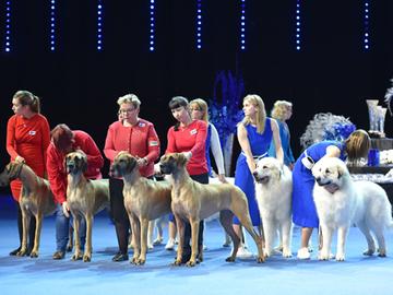 Suomi on koiranäyttelyiden tittelirohmu