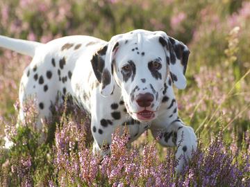 Maa- ja metsätalousministeriö selvittää virallisen koirarekisterin perustamista