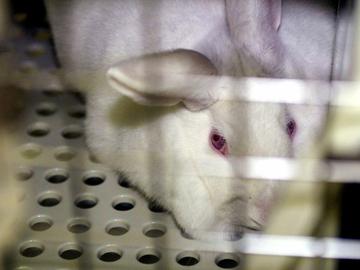 EU-mepit haluavat kieltää kosmetiikan eläinkokeet
