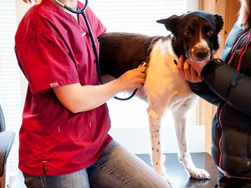 Eläinlääkärin vastaanottoja yli 700