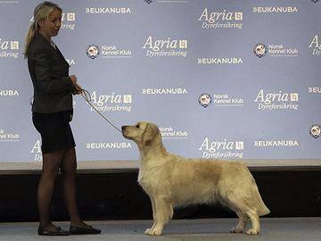 Epidemia tappaa koiria Norjassa