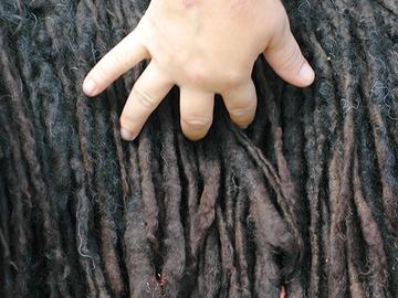 Puutiaisten levinneisyysalue kasvaa