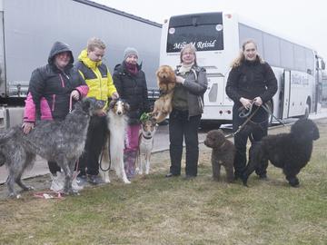 Crufts – maailman suurin koiranäyttely