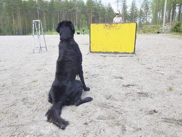 Vaarallinen hyppyeste huolestuttaa palveluskoiraharrastajia