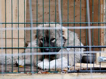 Uudesta eläintautilaista apua lemmikkien rajavalvontaankin