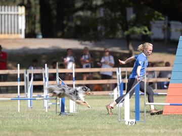 Agilityn suomalaisjoukkueille kultaa ja hopeaa European Open  -kilpailussa