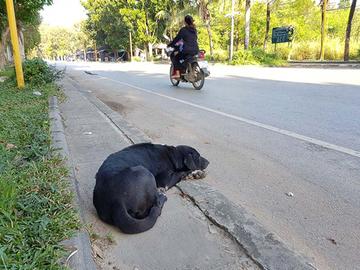 Ruotsissa kohu Hundsportin rescuekoirajutusta