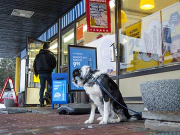 Kioskien ovet pysyvät edelleen kiinni kotikoirilta