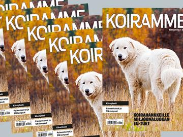 Marraskuun Koiramme kokonaisuudessaan verkossa