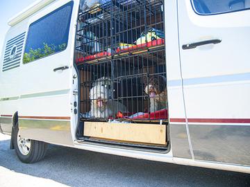Koiria koskevia asioita uudessa eläinkuljetusoppaassa