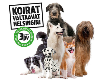 Koiramessut jatkaa koiraharrastajien itsenäisyysjuhlaa