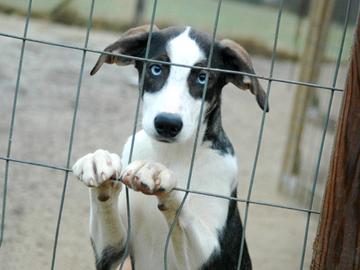 Lemmikkieläinten kohtelu ei ole huonontunut