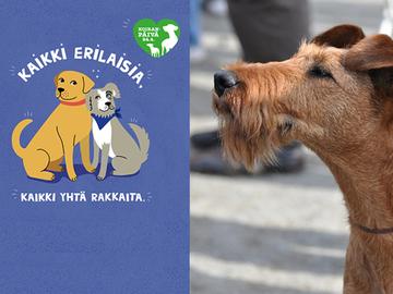 Kennelliitolta podcasteja koiranhankinnan tueksi