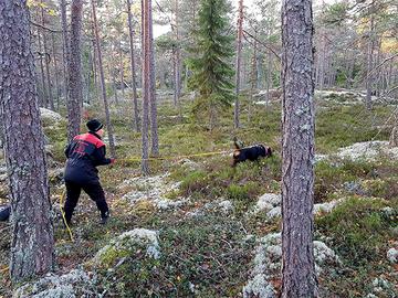 Jälkikoirien katoon etsitään syitä metsistäkin