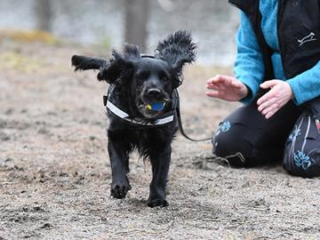 Koirista koituva ilo korostui koronaharmien vastapainona