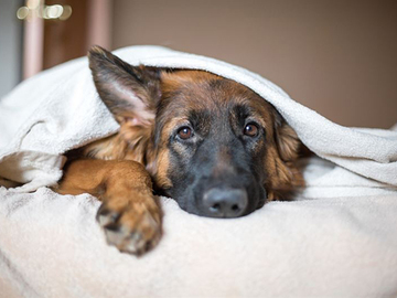 Koirille eivät sovi ihmisten särkylääkkeet