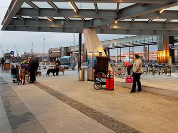 Paljon puutteita lemmikkien tehoratsiassa Helsingissä