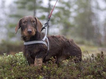 Metsästysajat muuttuvat – hirvijahti jatkuu tammikuulle