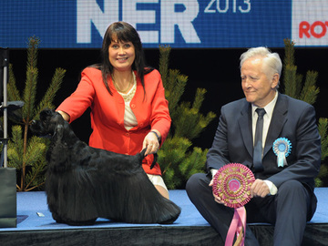 Koiramessuille liki 22 000 koiraa – Helsingin Maailmannäyttelyn ennätys rikki