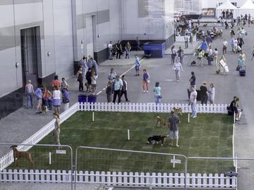 Ministeriö kielsi koiranäyttelyn