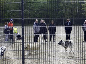 Orimattilaan vihdoin koirapuisto?