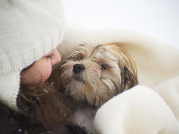 Koira avuksi helpottamaan hammaslääkäripelkoa