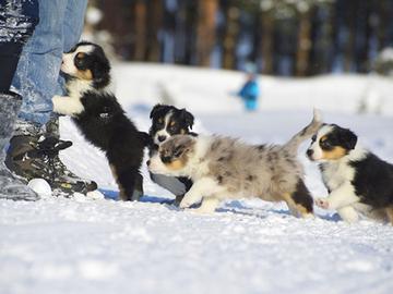Eläinten hyvinvointilain valmistelu alkaa alusta?