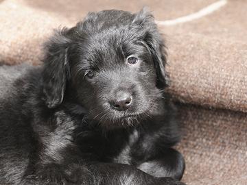 Bella on Pohjoismaiden suosituin koiran nimi
