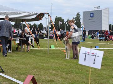 Koiranäyttely sujui ruuhkitta Porissa