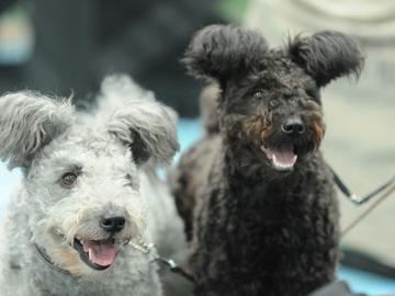 Unkari turvaa omia koirarotujaan lain avulla