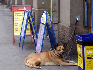 Kioskien ovet jo raollaan koirille