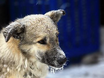 Romaniasta tuodulla koiralla todettu ihmisperäinen tuberkuloosi