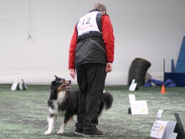 Lähes 368 000 starttia koiran kanssa viime vuonna