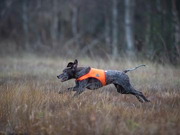 Metsästysrotujen kuolinsyyt poikkeavat muista
