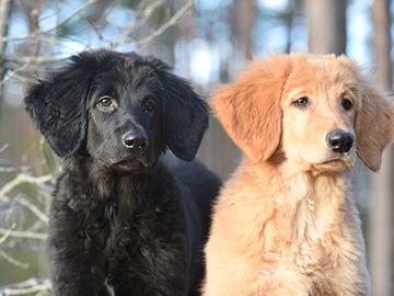 Valtakunnallinen koirarekisteri toteutuu vuoden 2023 alussa