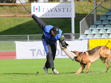Koirien raaka kohtelu siirsi suojelukoiraharrastuksen tauolle