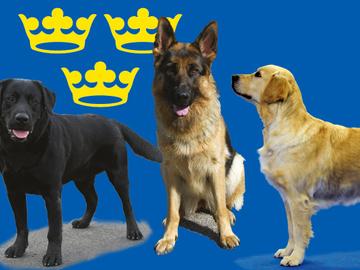 Ruotsissa yli 900 000 koiraa