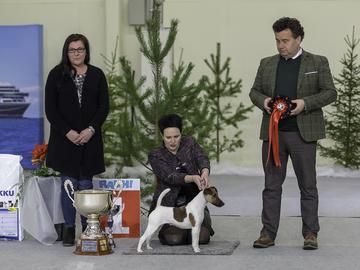 3692 koiraa Turun näyttelyssä